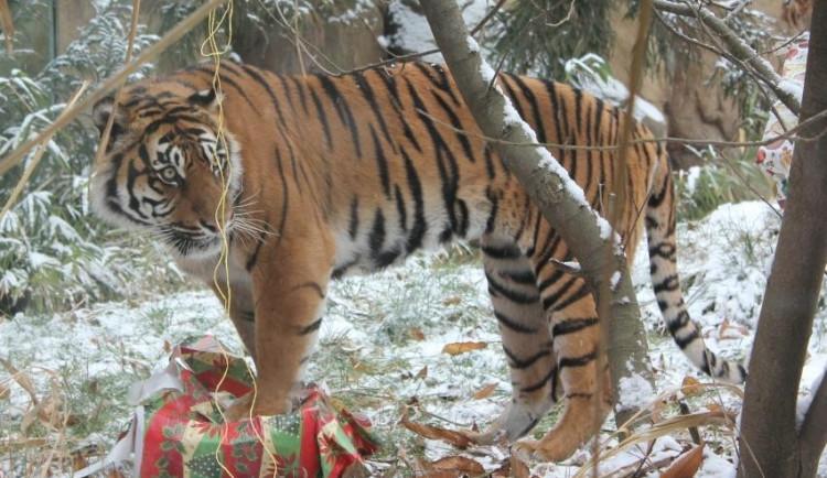 Brněnská zoo poskytla azyl uprchlíkům z Prahy