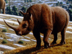 Archeologové našli v Brně lebku čtvrtohorního nosorožce