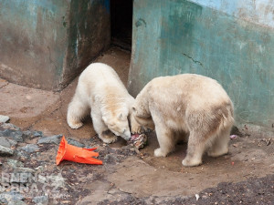 Brněnská zoo nabídne komentovaná krmení i na Štědrý den a Nový rok