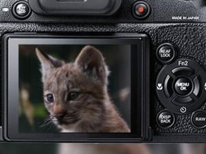 Zoo udělá kalendář z nejlepších fotek od návštěvníků
