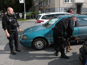 Strážníci řeší případy psů zanechaných v rozpálených autech