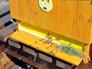 Hotel International bude jako první hotel na Moravě chovat včely