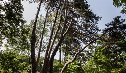 Dnes začíná ekologická soutěž o Evropský strom roku