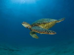 Záchrana želv a 17 000 000. návštěvník
