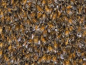 Neznámý pachatel otrávil na Brněnsku včelstva, škoda 100.000 Kč