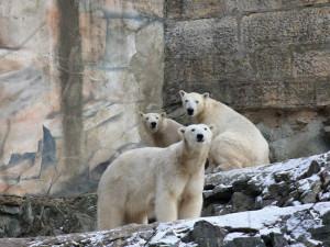 Adoptivní rodiče už přispěli brněnské zoo dvacetmilionů korun