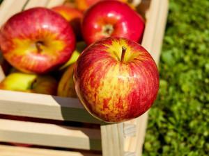 Pozor! V Česku se prodávají polská jablka, která mají sedmkrát více pesticidů, než povoluje zákon