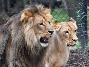 Brněnská zoo měla loni druhou největší návštěvnost za posledních dvacet let