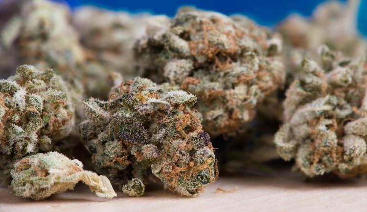 U svaté Anny opět předepisují marihuanu. Je z Kanady a stojí dvě stě korun za gram