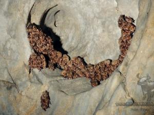 Býčí skála se letos stala největším zimovištěm netopýrů, ukrývá jich přes tři tisíce