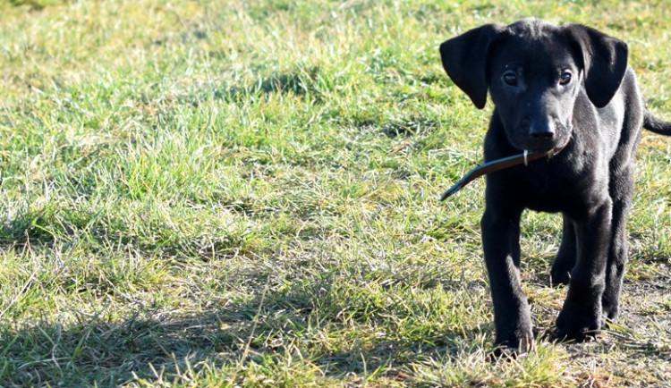 ZÁPESNÍK: Jak jsem získal policejního psa