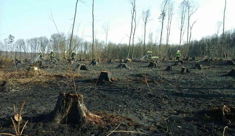 Na Brněnsku řádí žhář. V týdnu dvakrát hořel les u Oslavan