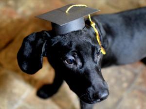 ZÁPESNÍK: Študovanej pes