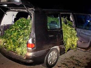 Opilý řidič vezl v autě pět velkých kytek marihuany