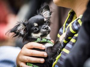 FOTO: V Lužánkách se sešli milovníci pejsků, aby našli nový domov psům z útulků