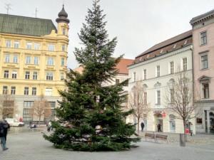 Vánoční strom letos na Svoboďák nepřiveze kamion, ale koňský povoz