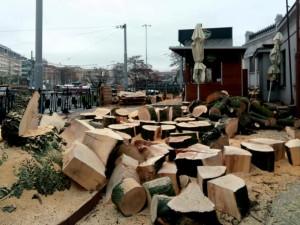 FOTO: Developer pokácel všechny stromy u hlavního nádraží