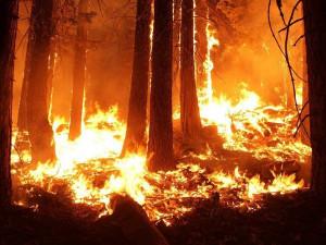 Na jihu Brna hořela stráň, chtěl v ní uhořet člověk