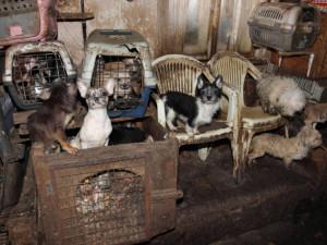 Lidé na jižní Moravě posílají stále více upozornění na nesprávný chov psů