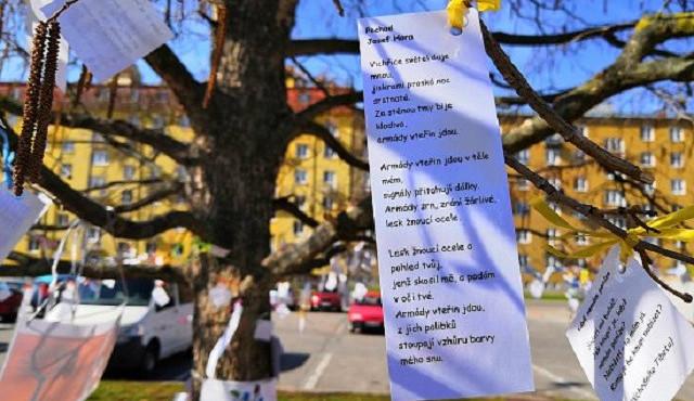 FOTO: Na náměstí v Blansku vykvetl básníkovník
