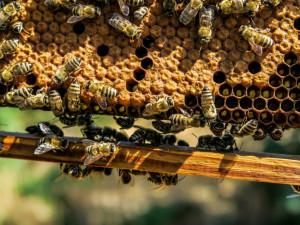 Neznámý zloděj ukradl dvacet úlů i se včelami
