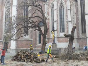 FOTO/VIDEO: Dělníci pokáceli stromy před bazilikou na Mendlově náměstí