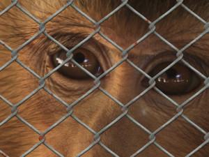 Dnes je mezinárodní den laboratorních zvířat. Podle ochránců nekonečný problém, umírají pro nás