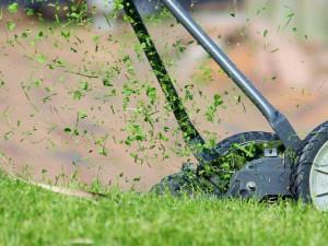 Brněnský střed kvůli suchu omezí sekání trávníků v parcích