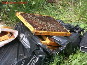 Ke kontejnerům v Žabovřeskách někdo vyhodil včelstvo i s plástvemi