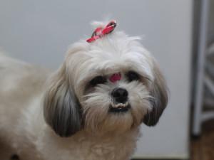 Žena chtěla štěně psa z Ukrajiny, poslala 65 tisíc do Kamerunu. K jejímu překvapení šlo o podvod