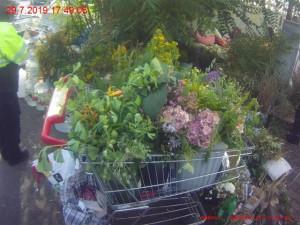 FOTO: Žena vezla nákupní košík napěchovaný květinami. Ukradla je na veřejných záhonech