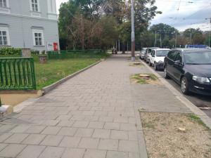 V centru Brna se kvůli suchu kácí stromy. Problémem je i nedostatek místa pro kořeny