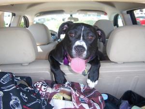 Nepozorná řidička se ohlédla po svém psovi a narazila do lampy