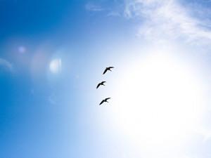 POČASÍ NA ČTVRTEK: I dnes se připravte na tropická vedra a slunečno. Oblačnost přibude až k večeru