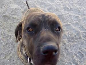 Majitelkauvázala psa u Prýglu a šla se projetna paddleboardu, pes utekl a pokousal návštěvnici