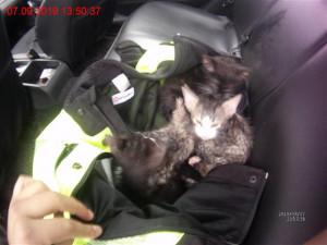 V Brně někdo pohodil čtyři malá koťata, skončila v útulku strážníků