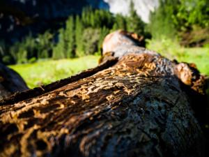 Pokud chceme v budoucnu zdravé lesy, stát musí dát lesníkům více peněz, říká lesnický odborník