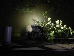 VIDEO: Policejní honička s mladíkem na bruslích v Brně skončila neobvykle. Bruslař se schovával pod vodou
