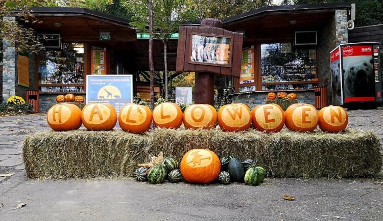 Pestrá oslava se vším všudy. Zoo Brno nabídne na Halloween dýně zdarma nebo světelnou show