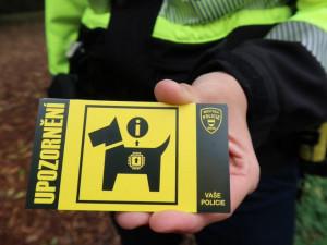 Brněnští strážníci vrací díky čipům zatoulané psy přímo majitelům