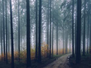 POČASÍ NA ČTVRTEK: Ráno bude mlha a občasný déšť