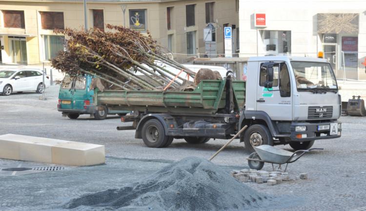 Brno do konce roku vysází stovky stromů a keřů, chce zmírnit přehřívání města