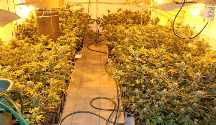 Kriminalisté odhalili pěstírnu marihuany. Zabavili skoro dvě stovky rostlin
