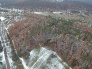 Na Kamenném vrchu v Brně začnou kácet suché stromy