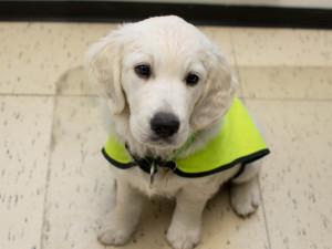 Pustit asistenčního psa do podniku je povinnost. Brňané si mohou vyzvednout nálepky pro své provozovny