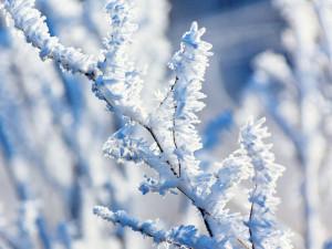 Vánoce na sněhu? Není to nemožné, podle meteorologů má být chladno