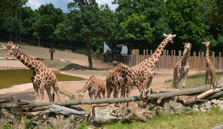 Brněnská zoo letos sčítá přes tři sta tisíc návštěvníků. Mají našlápnuto k překonání rekordu