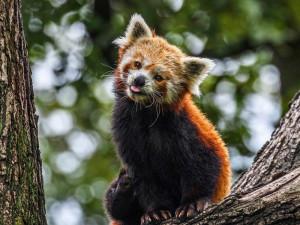 Dárek, který má opravdový smysl? Zážitkový program zpestřující život zvířat nebo adopce oblíbeného obyvatele Zoo Brno.