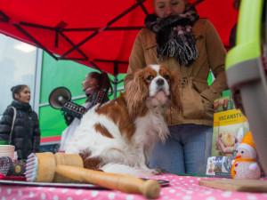 Místo kapra na talíři pes. Aktivisté budou v Brně prodávat vánoční pejsky na maso