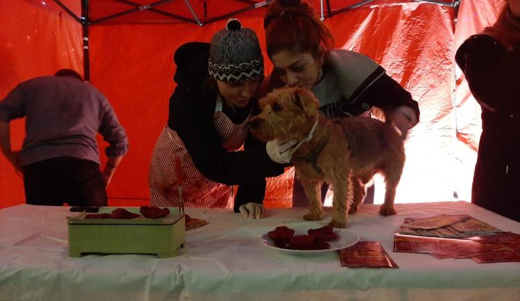V Brně se prodávali vánoční psi. Aktivisté chtěli upozornit na týrání zvířat